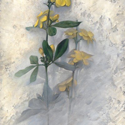 Jazmines amarillos II